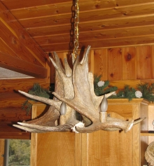<h5>Moose Antler Chandelier </h5>