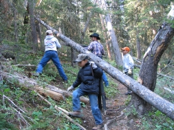 <h5>No chainsaws allowed in the wilderness  </h5><p>2007</p>