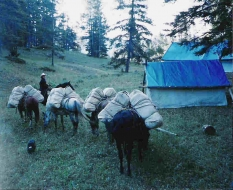 <h5>Dena Packing Feed To Sage Creek Camp  </h5>