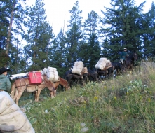 <h5>Packing Hay to Sage Creek Camp </h5>