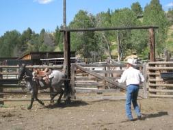 <h5>Breaking Horses...</h5><p>07/29/2011 </p>