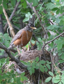 <h5>The Robin Nest</h5>