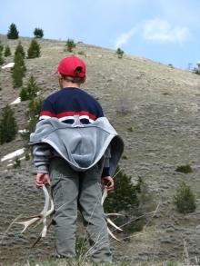 <h5>Elk on the hillside!</h5>