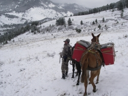 <h5>2008</br>Spring Bear Hunting</br>in Montana  </h5><p>5/13/2008</p>