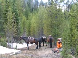 <h5>2005</br>Hanke & Reed Bear Hunt  </h5><p>5/26/2005</p>