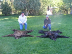 <h5>2005 Bear Rugs</br>Hanke & Reed   </h5><p>5/28/2005</p>