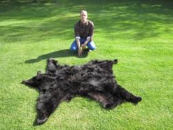 <h5>Moeller Bear Rug</h5><p>5/16/2012 </p>