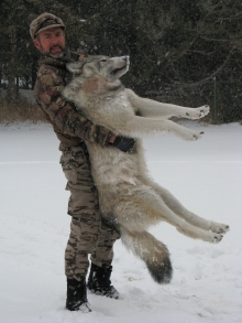 <h5>Biggest!</br>Randy's 2012 Wolf</h5>