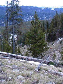 <h5>2004</br>Hunting High In The Absaroka Mountains</h5><p>11/16/2004</p>