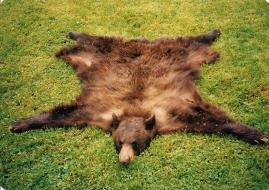<h5>Freidag Bear Rug</h5>