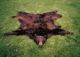 <h5>Schneider Bear Rug</h5>