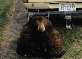<h5>Zimmerman Bear Rug</h5>
