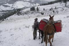 Spring Bear Hunting in Montana