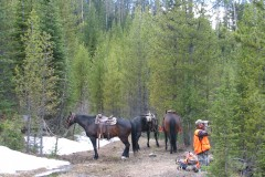 Hanke & Reed Bear Hunt