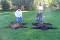 2005 Bear Rugs / Hanke & Reed